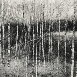 Quarry Birch I Monoprint David A Parfitt RI